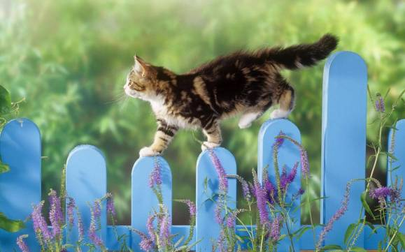 393300-cats-walking-a-fence-line.jpg